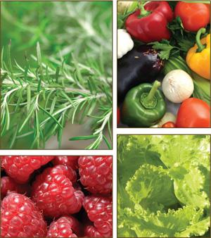 Alimentos orgánicos: 50 cultivos que puedes sembrar en macetas | LookVerde